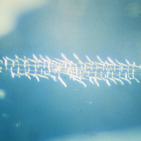 Gem Microscope Moonstone